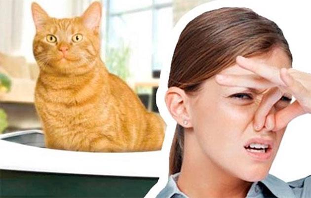 пот пахнет кошачьей мочей