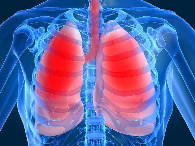 легкие в грудной клетке